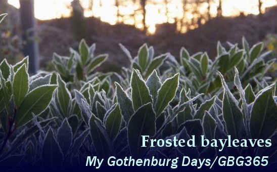 Frosted bayleaves card