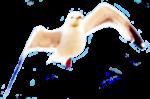 Fuzzy header seagull